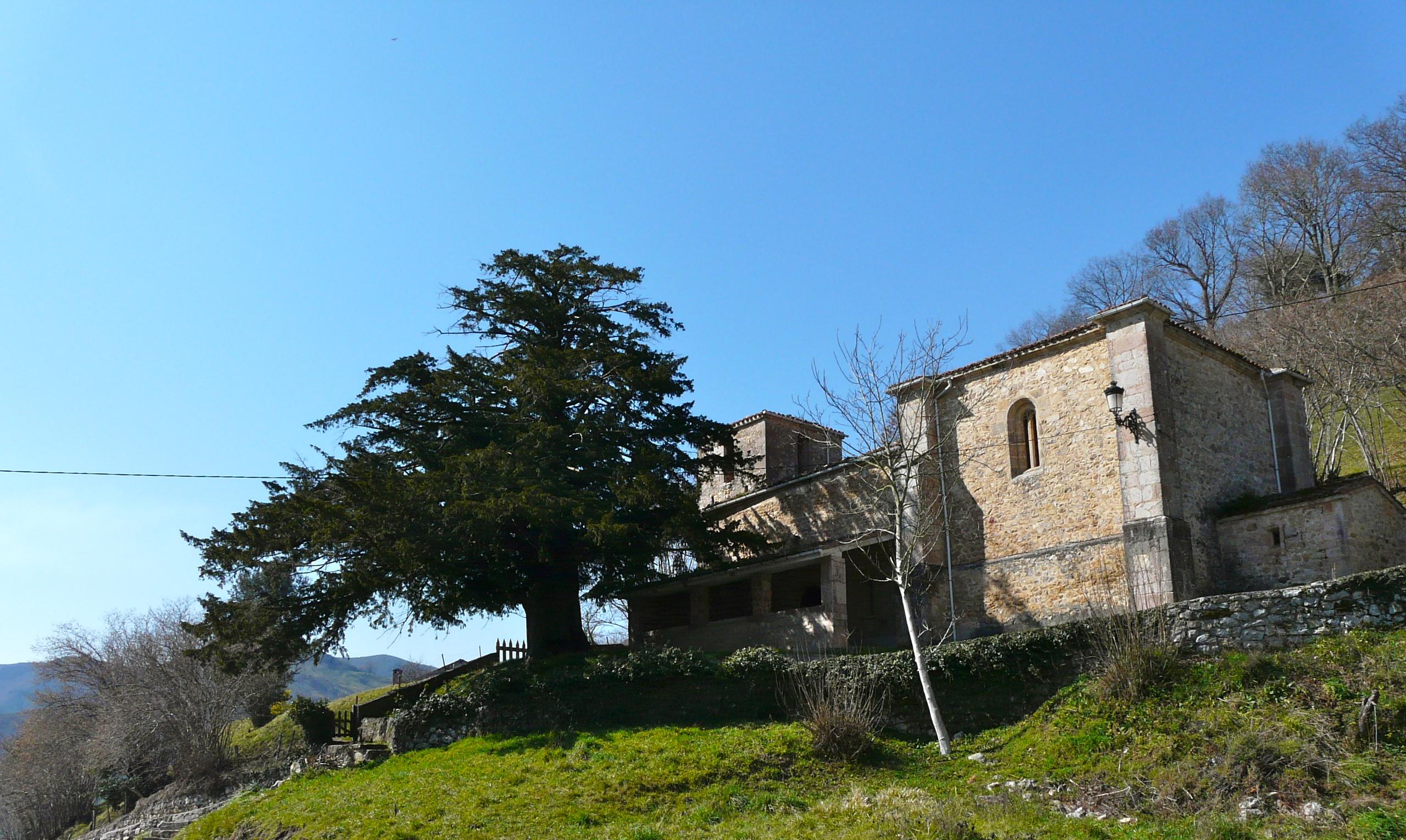 árbol-del-Tejo-Arangas-Asturias